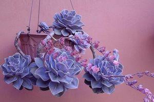 紫珍珠什么时候开花