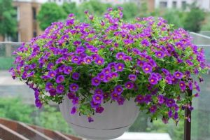 这10种花不用管,也能美成仙!