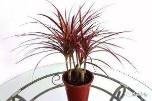 25种常见的观叶植物,每种都很不错