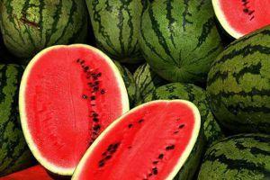 盆栽西瓜需要人工授粉吗