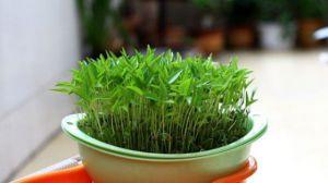 水培植物如何增氧