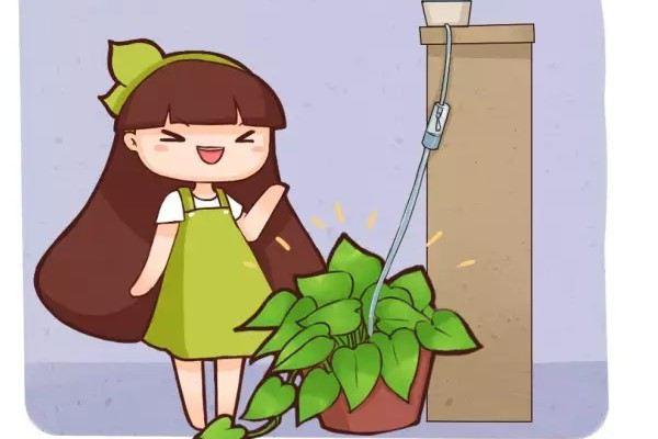 夏季天天浇水,累死,学他这样做,给花自动浇水!