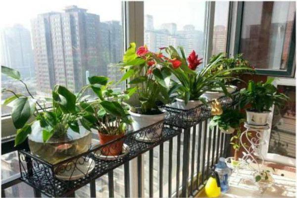 适合家庭种植的几种阳台盆栽蔬菜