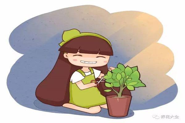 给花搞了点小动作,一晚上冒出7、8个芽,长势太猛了!