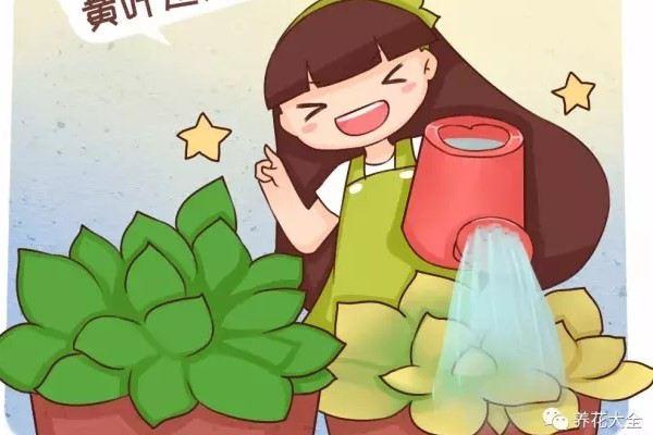 浇水加2滴这东西,3天黄叶变绿叶!