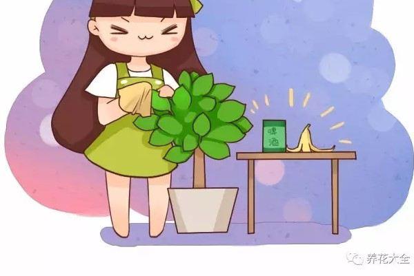 给花擦点这个,叶子贼绿,从不发黄!