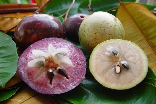 金星果的种植方法
