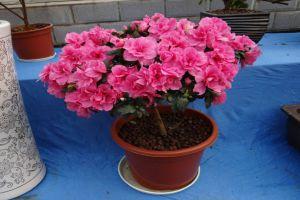 春季盆花的养护禁忌