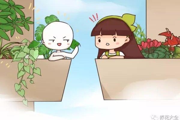 邻居在北阳台养的花,比我的南阳台还美,怎么做到的?