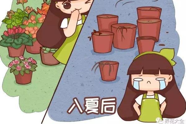 阳台养了100盆花,高温1个月,死得只剩100个盆!