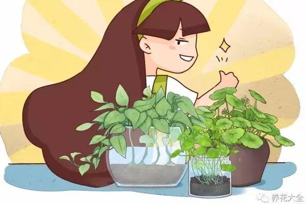 姐姐只用一盆水就让花爆盆,而且从不烂根黄叶,咋做到的?