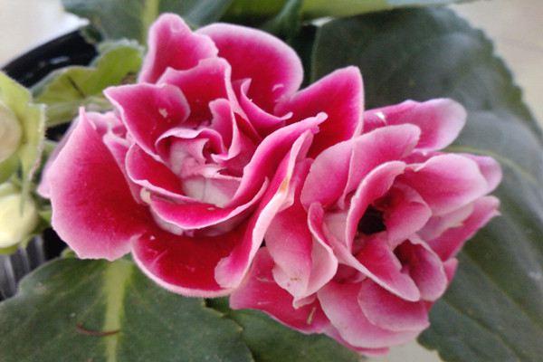 花卉晒太阳的4种误区