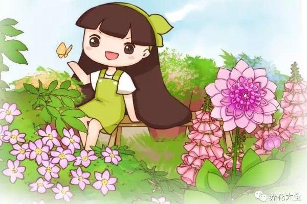 6种爬藤花,种上就能收获1面花墙!