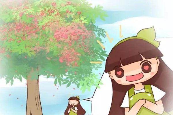 老天,这些树居然活了5000年!赶得上中国历史了!