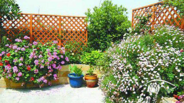 5种适合屋顶绿化的植物