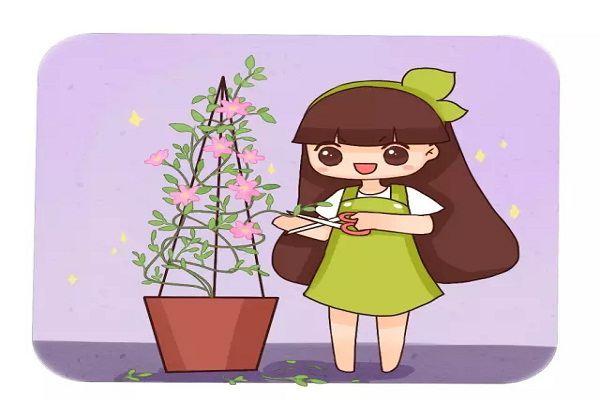 狠心给花一剪刀,竟让它疯狂开花不黄叶!