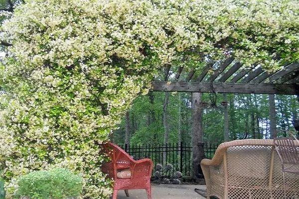 把这19种花种起来,整个家都能变成大花园!
