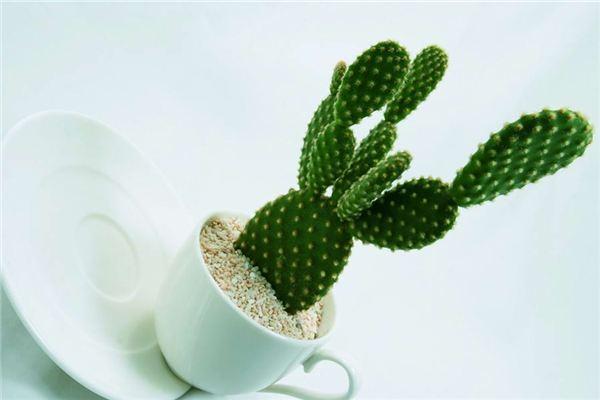 五种常见的观茎植物 ,茎是亮点!