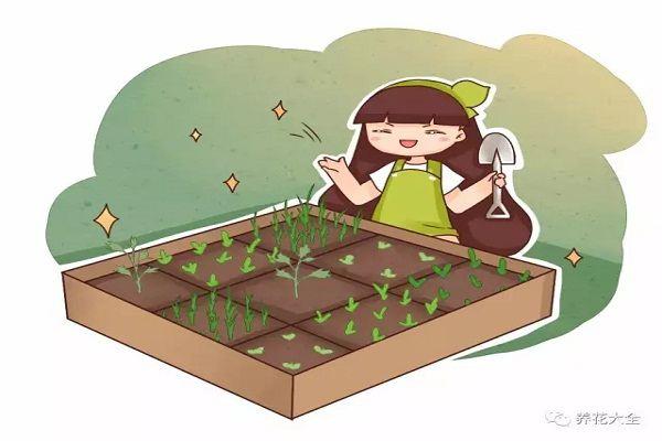 你的菜园子脏乱差,再看看人家的,比大花园还美!
