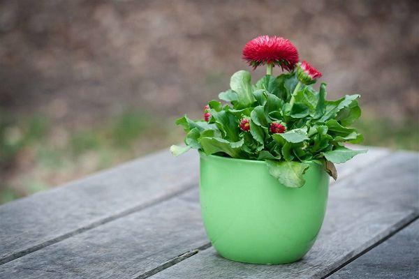 花卉出现病害产生的原因大全!