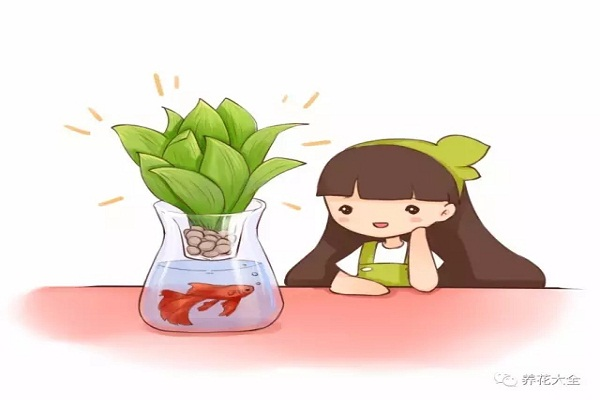 这些花给点儿水就能活!一点儿都不费事儿!还不赶紧养?