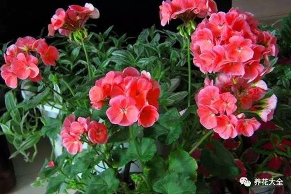 出门1个月,没有给这些花浇水,没想到长得更旺了!