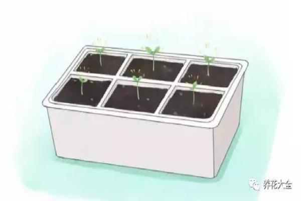 现在随手撒把种子,半年不用买菜啦!