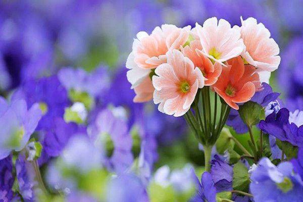 购买花卉植物注意这些,不要上当!