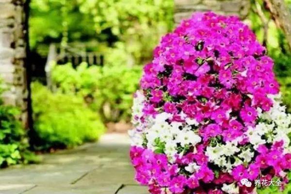 邻居用漏勺轮胎养花,全村人排队去看!