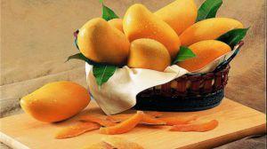 芒果盆栽种植方法