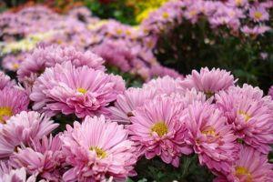 8种适合秋季观花的植物