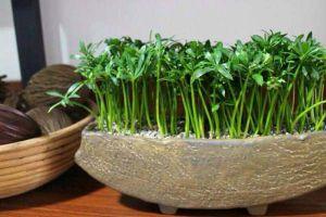 路边小东西,竟能种出小盆栽,比买的还好看!