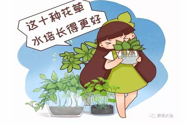 这10种花草水培长得更好,别傻到只会土养了!