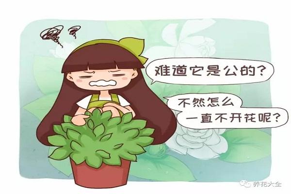 难道我家的花是公的?为啥光长叶子不开花?