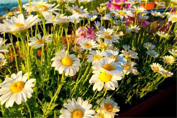 秋季怎么给花卉浇水?