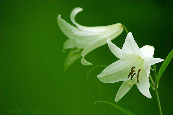花卉缺肥的几种表现