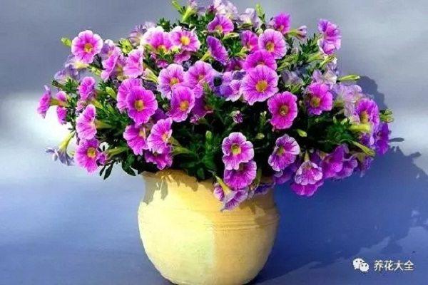 入秋就要养这十种花,开花了邻居都羡慕你