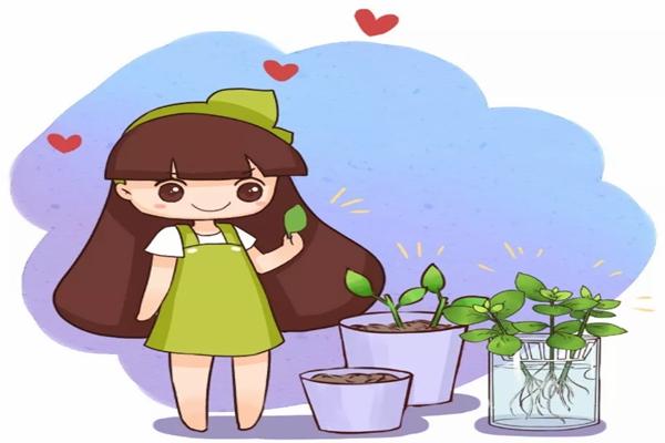 过年给花来个大扫除,叶子瞬间绿得冒油,花开得更艳!