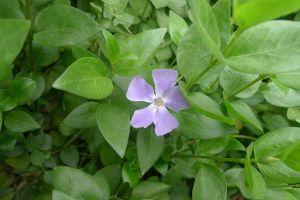 四季常春又耐寒的花有哪些