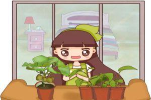 挖1勺种子丢盆里,7天养成小盆栽!