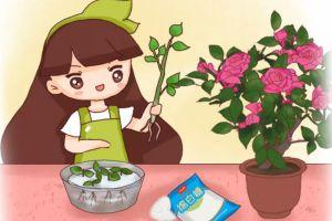 生根剂不用买,只需2分钟在家就能做,生根率100%!