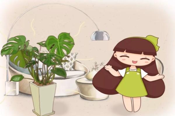 家里1盆花,吸走致命毒,再也不怕装修甲醛!
