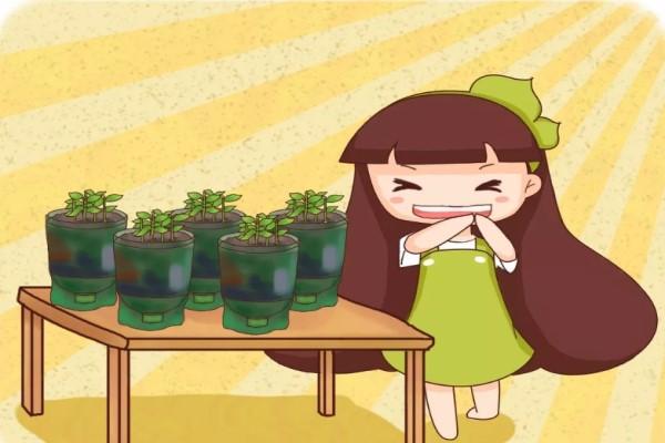 饮料瓶剪1刀,拿来养花,1个月不浇水竟然长疯了!