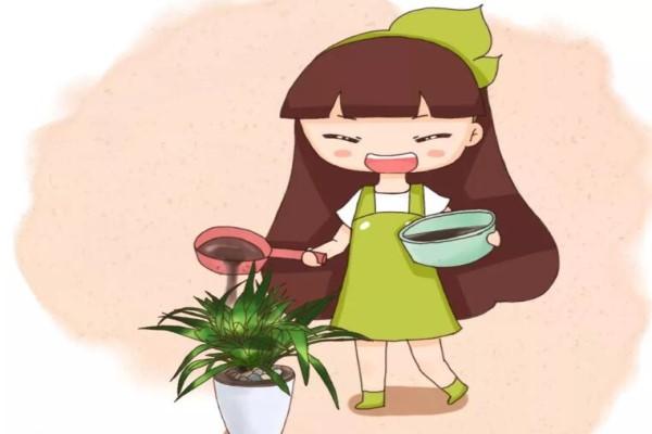 """给花喝点醋,5天黄叶变绿叶,效果堪比""""神仙水""""!"""