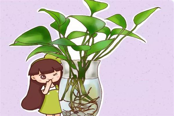 这5种花扔水里,10天长出大白根,叶子肥的能滴油!