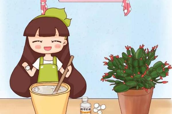 给花吃粒消食片,像打了兴奋剂,花开个没完!