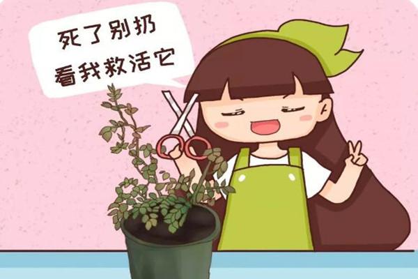 你家的花死透了?别扔,1招救活蹭蹭长!