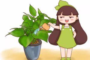 浇花掺点小东西,绿萝文竹…长疯了,呼呼直蹿20米!