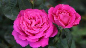 一年四季都能开花的花卉有哪些