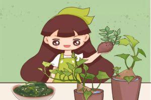 夏天快吃长寿菜,路边到处都是,掐根枝扔水里就活!